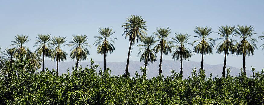 Salton Palms by James Blackwell JR