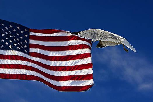 Tim Wilson - Salute The Flag