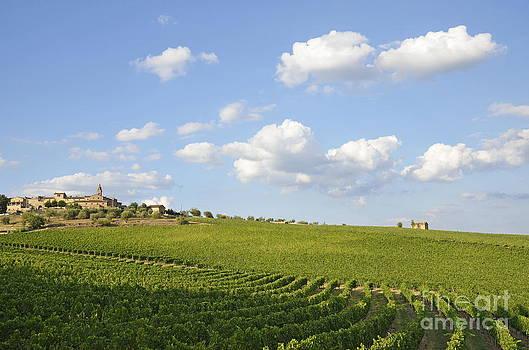 San Gusme vineyards by Sami Sarkis
