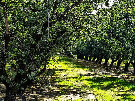 Joe Bledsoe - San Joaquin Orchard