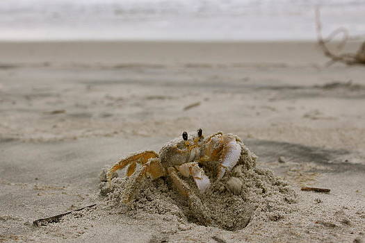 Sand Crab by Nelson Watkins