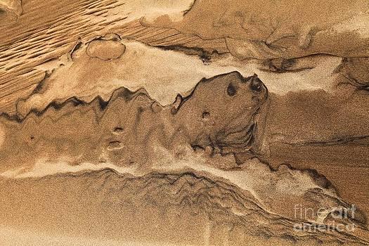 Adam Jewell - Sand Dog