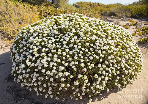Tim Hester - Sand Dune Plants