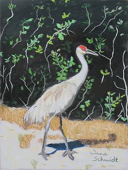 Sand Hill Crane Walking the Sands of Seminole Forest by Dana Schmidt