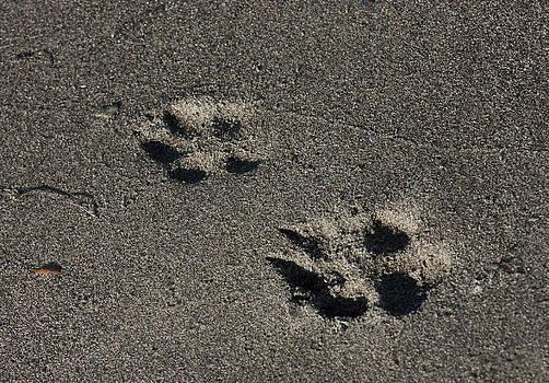 Sand Prints by Barbara  White