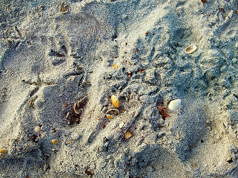 Sand Tracks by Jessica Yudis