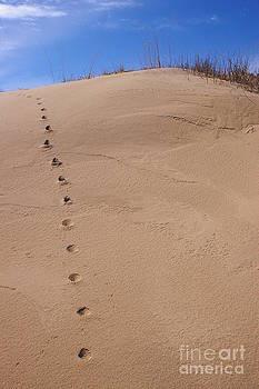 Randy Pollard - Sand Tracks