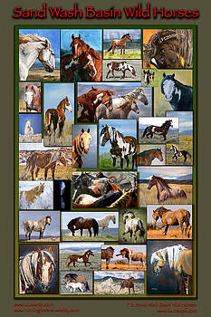 Sand Wash Basin Wild Horses by Lourie Zipf