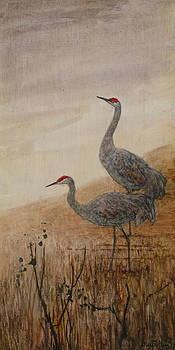 Sandhill Cranes by Floy Zittin