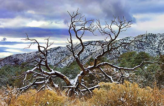 Brian King - Sandia Snow Tree