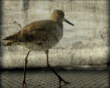 Sandpiper by Deborah Mix