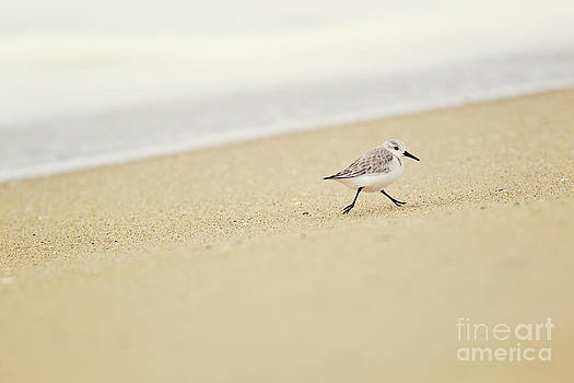 Susan Gary - Sandpiper On the Move
