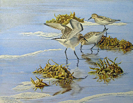 Sandpipers Canaveral National Seashore by Richard Devine