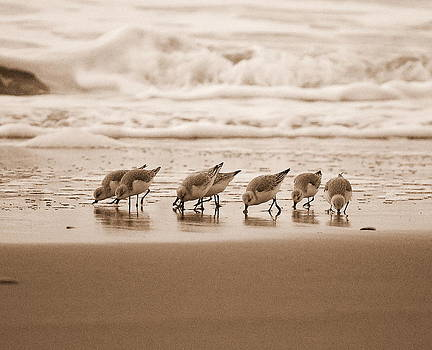 Sandpipers by Mamie Gunning