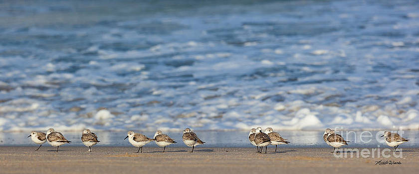 Michelle Constantine - Sandpipers Sleeping by the Sea