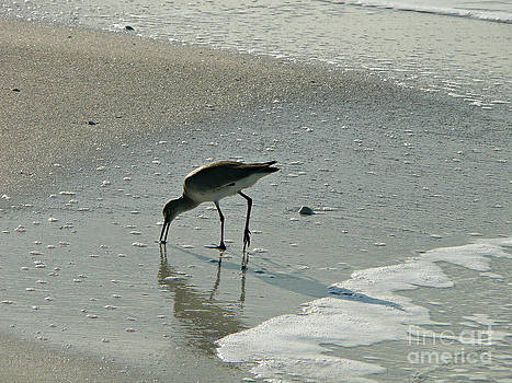 Sandy Beach Bird walk by Rachel Gagne