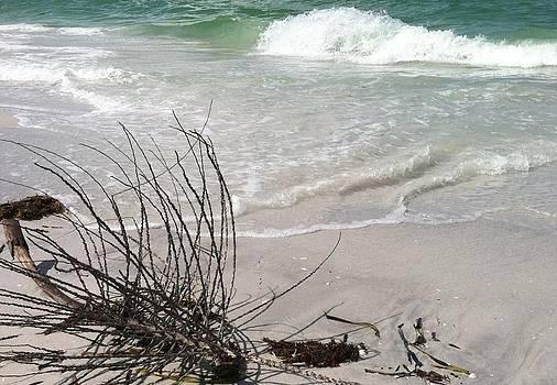 Sandy landscape by Tara Miller