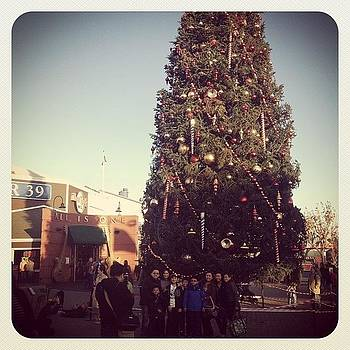 #sanfransisco Pier 39 #christmas by Barrett Wilson