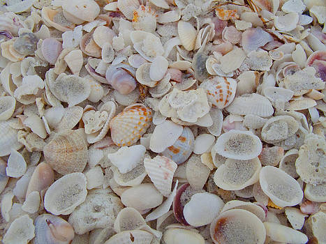 Sanibel Shells by Bucko Productions Photography