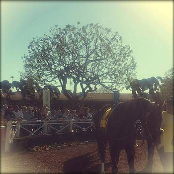 #santaanita #racehorse. If I Had Money by Zarah Delrosario