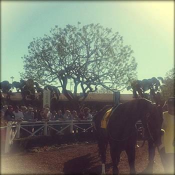 #santaanita #racehorse. If I Had Money by Zarah Delrosario