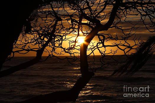 Sapling Sunrise by Erik Barker