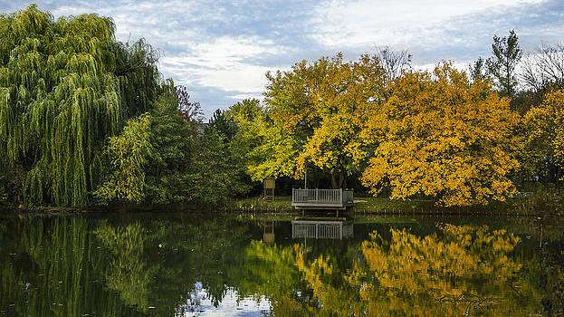 Sarah's Grove in Autumn by Karen Casey-Smith