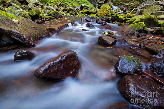 Katka Pruskova - Satina Creek I