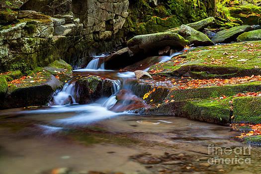 Katka Pruskova - Satina Creek II