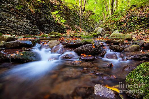 Katka Pruskova - Satina Creek III