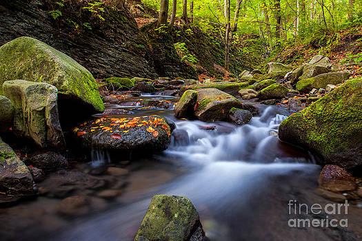 Katka Pruskova - Satina Creek V
