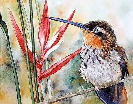 Saw-billed Hermit by Kitty Harvill