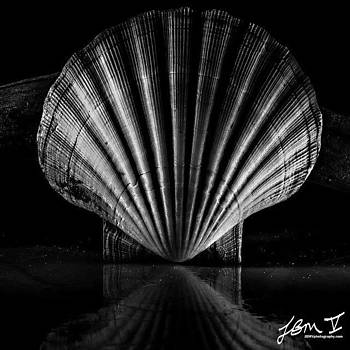 Scallop Shell by Jb Manning