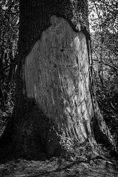 Scard by Darren Wilders