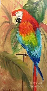Scarlet Macaw by Barbara Haviland