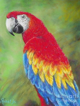 Scarlet Macaw by Ace Robst Jr