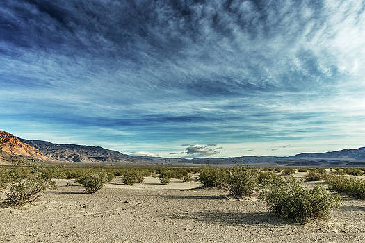Scenery Of Desert With Bushes, Saline by Ron Koeberer