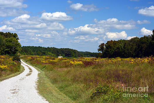 Scenic Country Road by Anne Marie Corbett