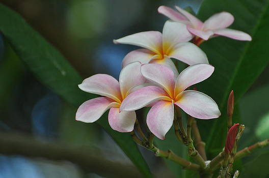 Scent of Hawaii by Old Pueblo Photography