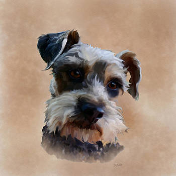 Schnauzer by Bamalam  Photography