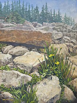 Schoodic Daffodils by Peter Muzyka