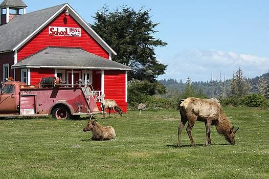 Schoolhouse Elk by Mark Cheney