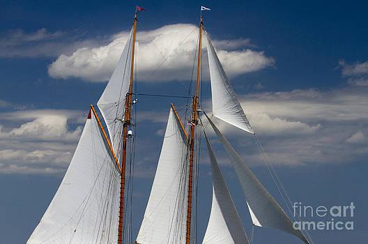 Schooner Germania Nova Sails by Dustin K Ryan