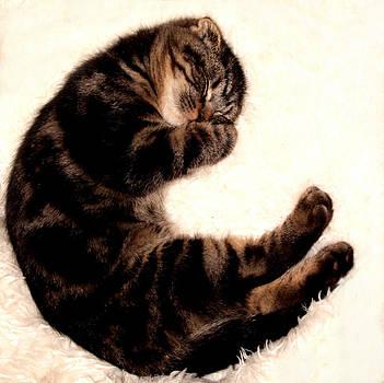 Scottish Fold Sleeping 1a by Robert Morin