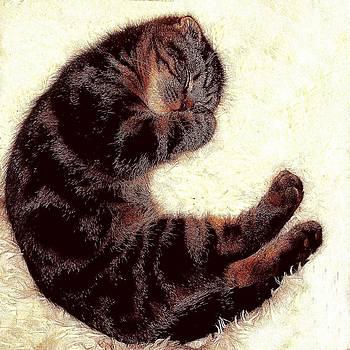 Scottsih Fold Sleeping 1b by Robert Morin