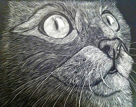 Scratch Art Kitty Cat by Brenda Brown