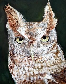 Screech Owl by Loretta Orr