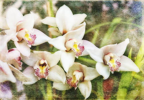 Scripted White Orchids by Joan Bertucci
