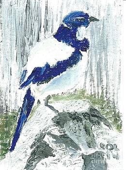Scrub Jay by Mary Solomon