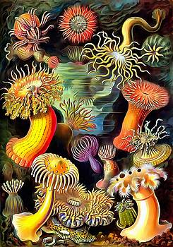 Sea Anemones by Ernst Haeckel